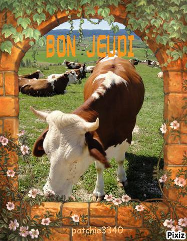 BON JEUDI : vache cadre