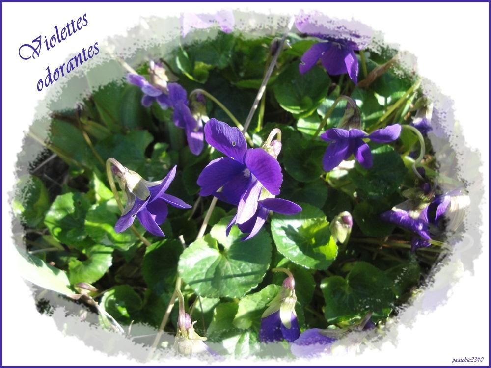 Plante vivace 10 lettres for Plante synonyme